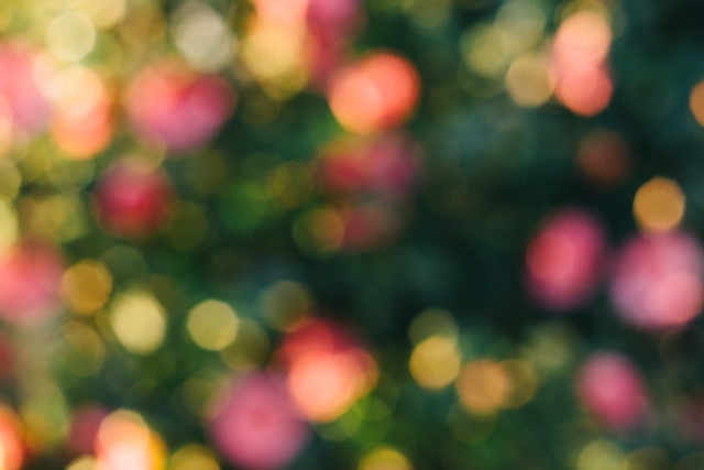 bokeh with pink flowers