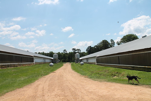 The Pham Family Farm, Immigrants Making a Good Life in Mississippi