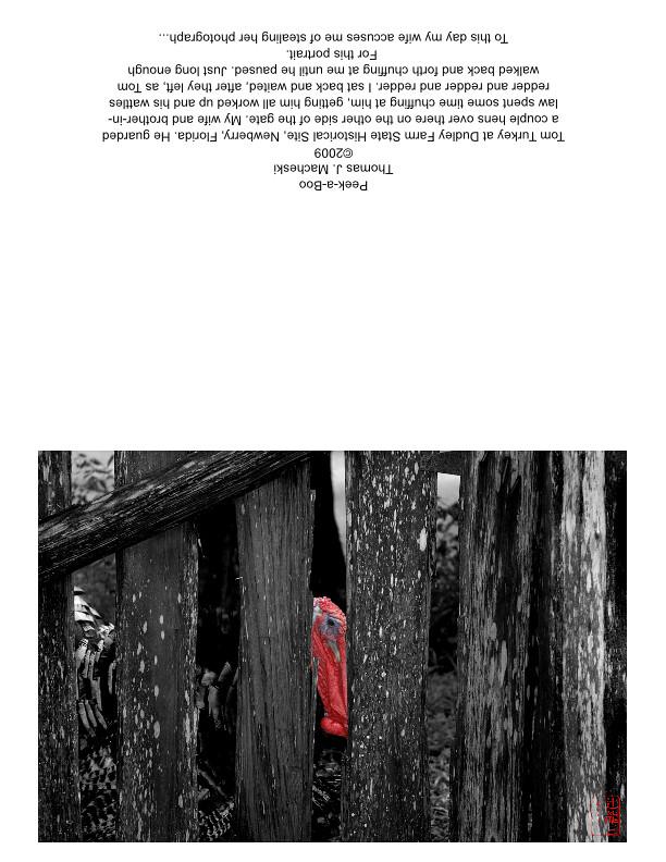 Peek-a-Boo_GreetingCard_HalfFold_Landscape-page001