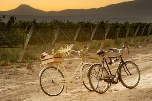 Recorridos por Bodega Séptima en bicicleta entre los viñedos