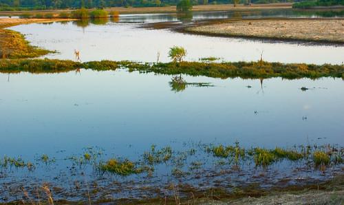 sunset grass landscape poland polska backwater trawa krajobraz zmierzch światłocień rozlewisko coloursofwater chairscuro barwywody