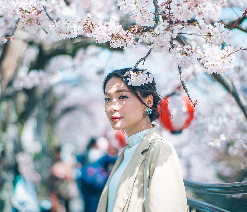 5.Roaming Under The Cherry Blossoms.