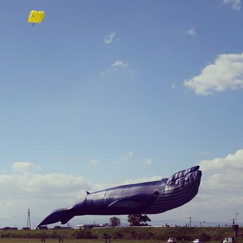 黄色いカイトとクジラ。