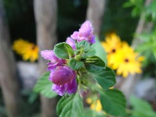 Blume das Frühjahr wurde wahr 0464