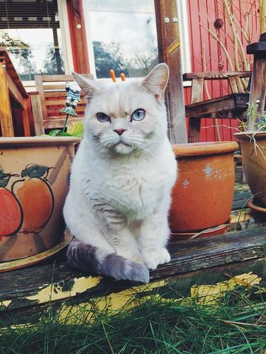 grumpy weather cat 2.0