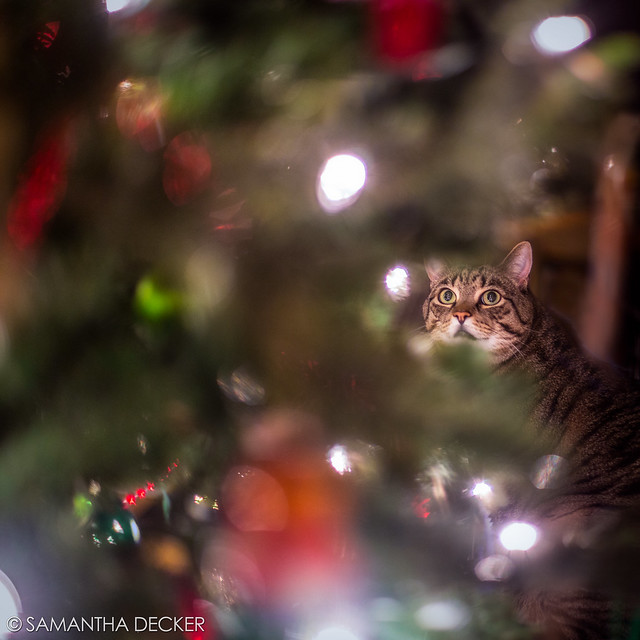 Casey Admiring the Christmas Tree