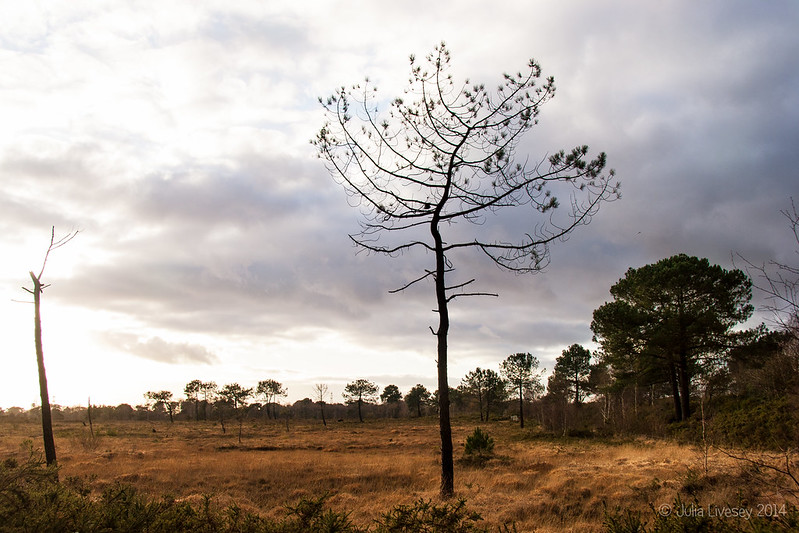 Grey skies over Upton Heath