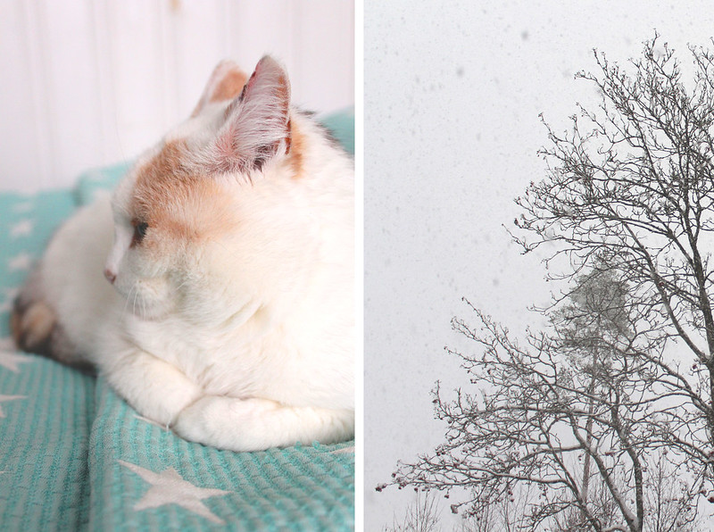 talvista1