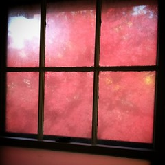 Tha maple tree outside my window is so intensely red, just the reflection of the light has tinted the pale blue walls lavender #nofilter #lovefall #fallinnewengland