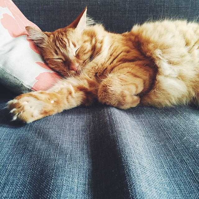10 Things I Learned From My Cat