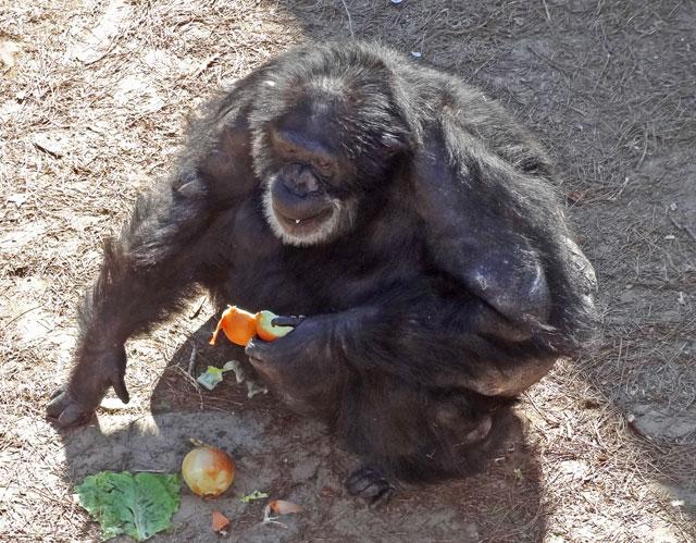 primates-eat