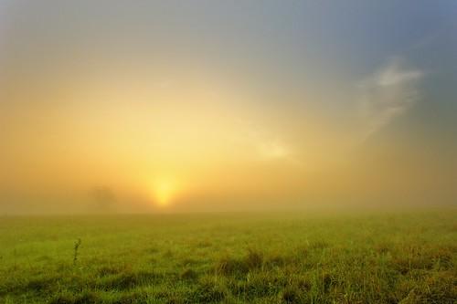 old grass fog sunrise prime nikon 28mm foggy prairie nikkor flinthills fenceline expanse oogle d700 bluestemm