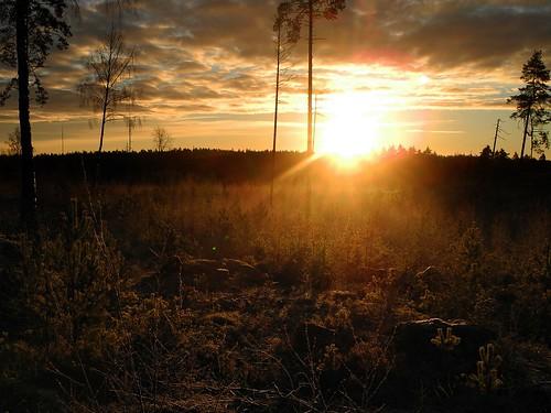 morning november forest sunrise finland geotagged fin uusimaa siuntio 2013 201311 20131130 yövilä övitsby övitsbyskogarna geo:lat=6025211388 geo:lon=2433059167