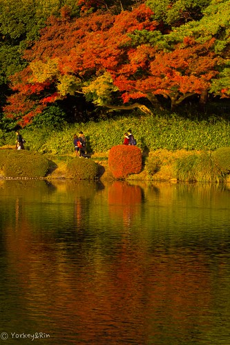 november autumn reflection japan tokyo olympus autumnleaves momiji 新宿御苑 紅葉 秋 rin 2014 shinjyukugyoen em5 olympusm60mmf28macro pc233052