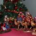 Feliz Navidad by Fotos_Mariano_Villalba