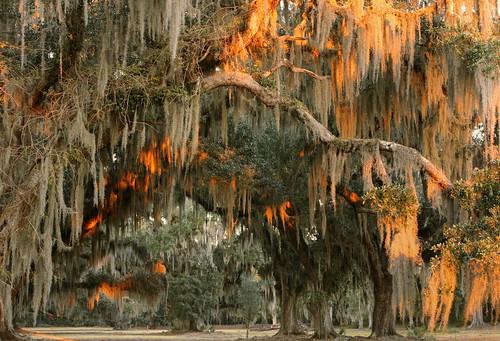 statepark autumn trees sunset lana nature catchycolors landscape louisiana liveoak spanishmoss mandeville gramlich tillandsiausneoides quercusvirginiana sttammanyparish fontainebleaustatepark lanagramlich dailynaturetnc14 nov212014