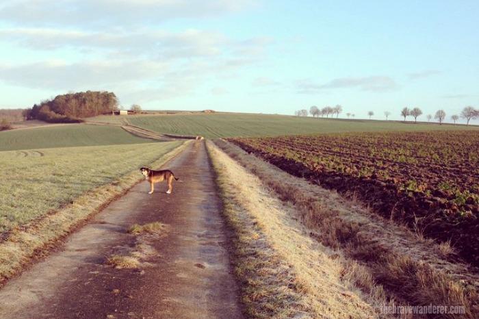 December Walk