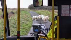 On board the Pembrokeshire Coastal Cruiser bus route
