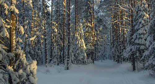 wood morning travel winter light holiday snow nature forest sunrise canon landscape eos woods mood russia snowy path walk magic north january atmosphere natura newyear neve magical inverno stroll ef luce paesaggio nord утро wintry kirov свет gooddaysunshine 2015 природа зима снег прогулка russi 600d vyatka 24105l wintermood настроение киров вятка sergeyponomarev viatka порошино сергейпономарев poroshino