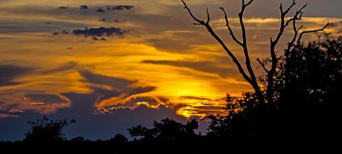 africa travel sunset sun color colour landscape southafrica african vibrant rich safari stunning strong setting hoedspruit krugernationalpark mpumalanga orpen orpengate imbalilodge
