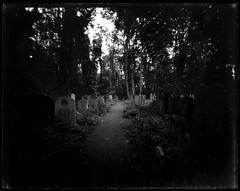 Tower Hamlets Cemetery Park 2