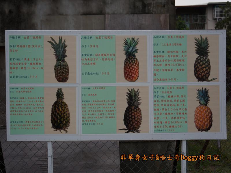 高雄九曲堂大樹舊鐵橋天空步道鳳梨罐詰工場32