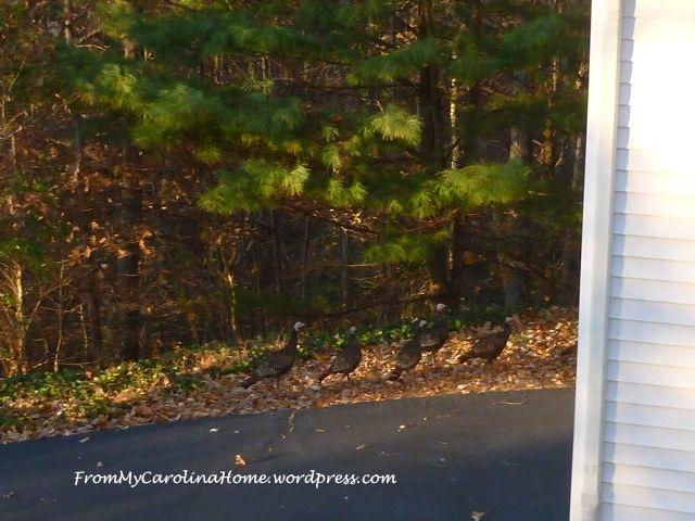 November Turkeys