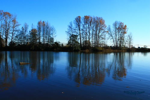 blue trees sky canada reflection water bc britishcolumbia slough deltabc simplysuperb