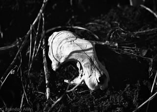 Tiny Skull 2
