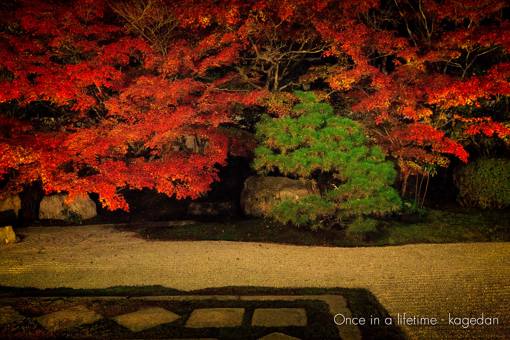 枯山水の紅葉