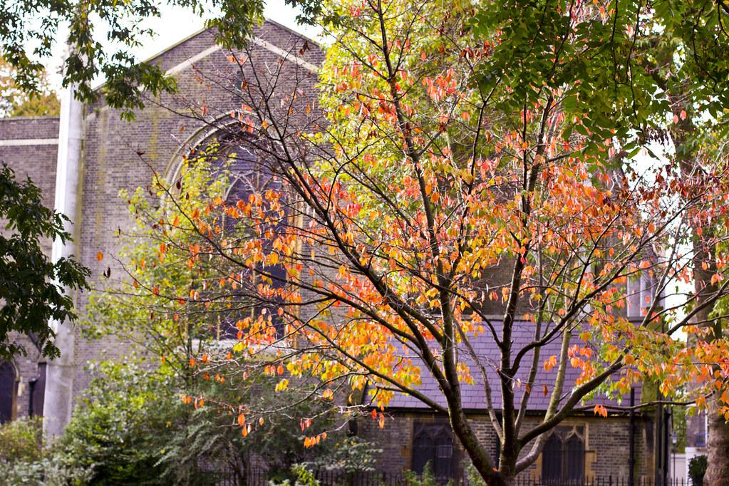 autumn leaves myddleton square kings cross square area