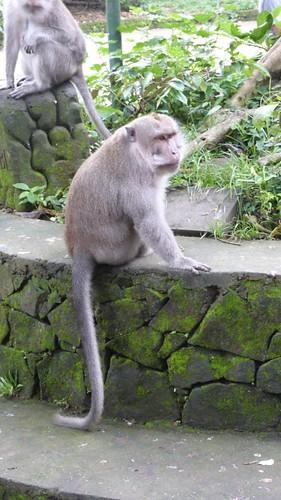 Bali-1-113