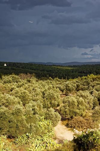 trees green clouds forest israel sony benshemen benshemenforest minolta70210mm sonya77