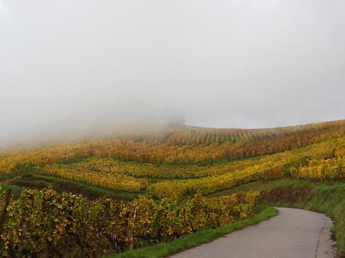 road autumn mist france automne landscape vineyard europe route alsace paysage vignes brume hautrhin routedesvins niedermorschwihr michelemp tuasbiendégustélesvinsdalsace