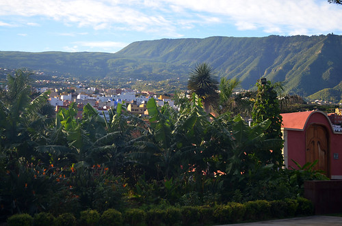 Orotava Valley and bananas, Tenerife
