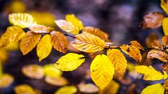 Herbst 2014