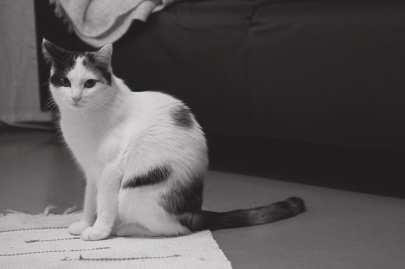 modelcat3
