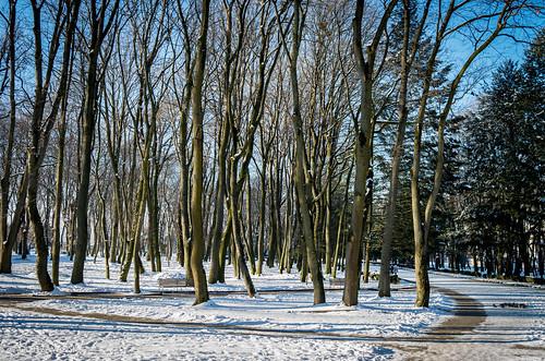 leica snow cold nature ukraine x galicia x2 xseries ternopil природа зима україна galicja galizien wniter tarnopol галичина холод сніг тернопіль leicaimages leicax2 ternopilskaoblast leicax2gallery
