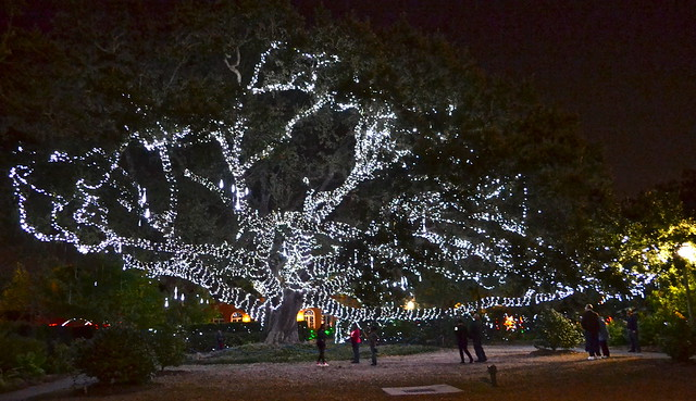 New Orleans City Park - Celebration of the oaks
