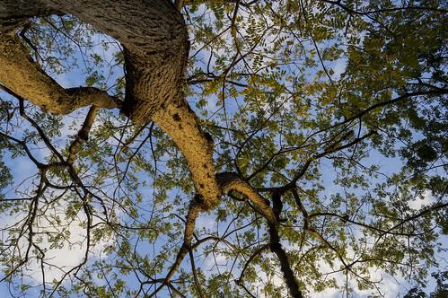 park tree sunrise arbol venezuela sony caracas amanecer f3 nex parquedeleste sonynexf3