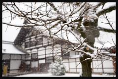 日本京都-金閣寺-雪.23