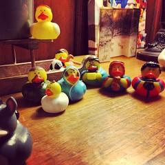 Nativity ducks #crimble