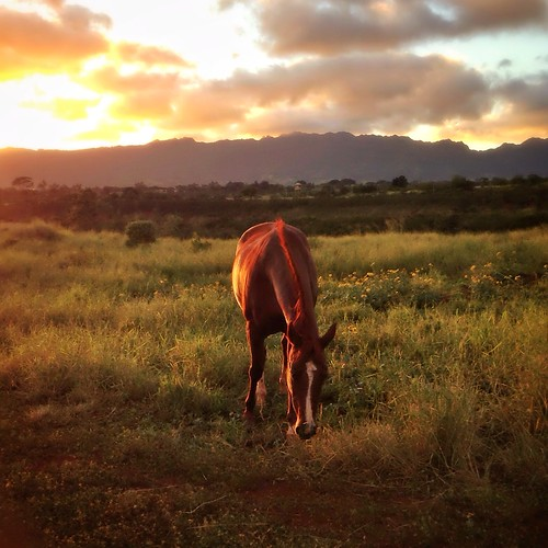 sunset horse hawaii