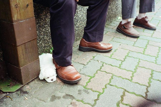 004.tiny puppy