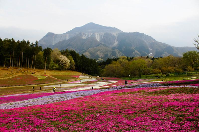 2014-04-19_00542_美の山.jpg