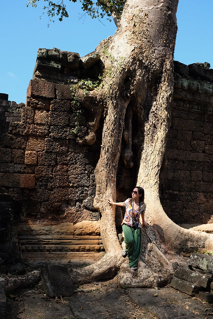 One of Preah Khan's trees
