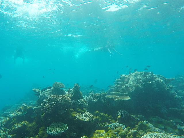 Snorkling in Maldives