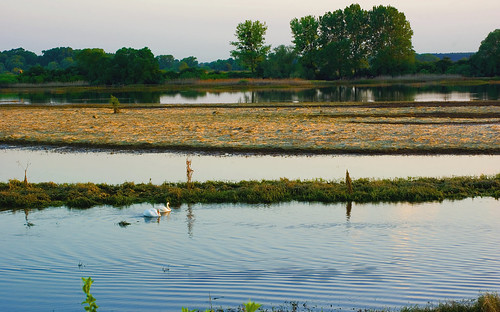 trees sunset grass birds landscape swan polska backwater trawa ptaki drzewa krajobraz zmierzch łabędź światłocień rozlewisko coloursofwater chairscuro barwywody