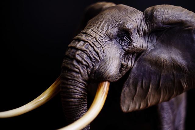 elephant figure 海洋堂のアフリカゾウのフィギュア