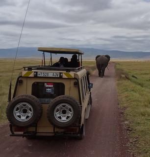 Ngorongoro jeep safari